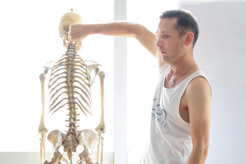 Adrian先生解剖学イメージ